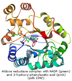crystal structure of aldose reductase