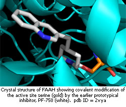 crystal structure of FAAH