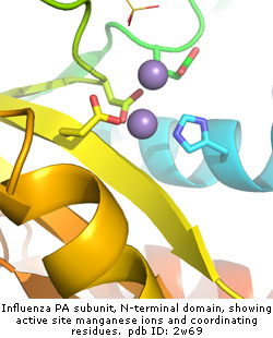 Influenza PA domain crystal structure