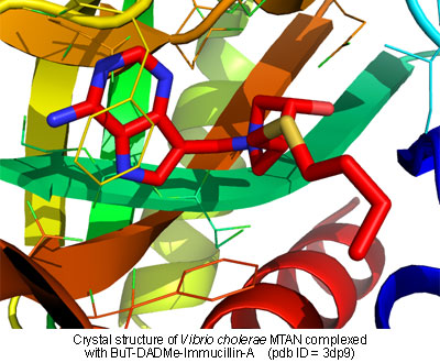 Crystal structure of MTAN complexed with BuT-DADMe-Immucillin-A