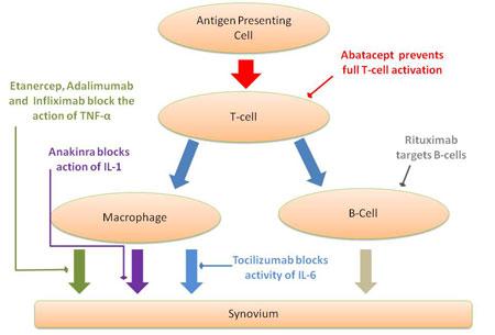RA cellular pathway