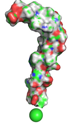 amyloid protein