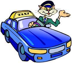cat driving a taxi