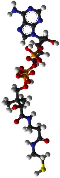Coenzyme A (CoA) - Wikipedia